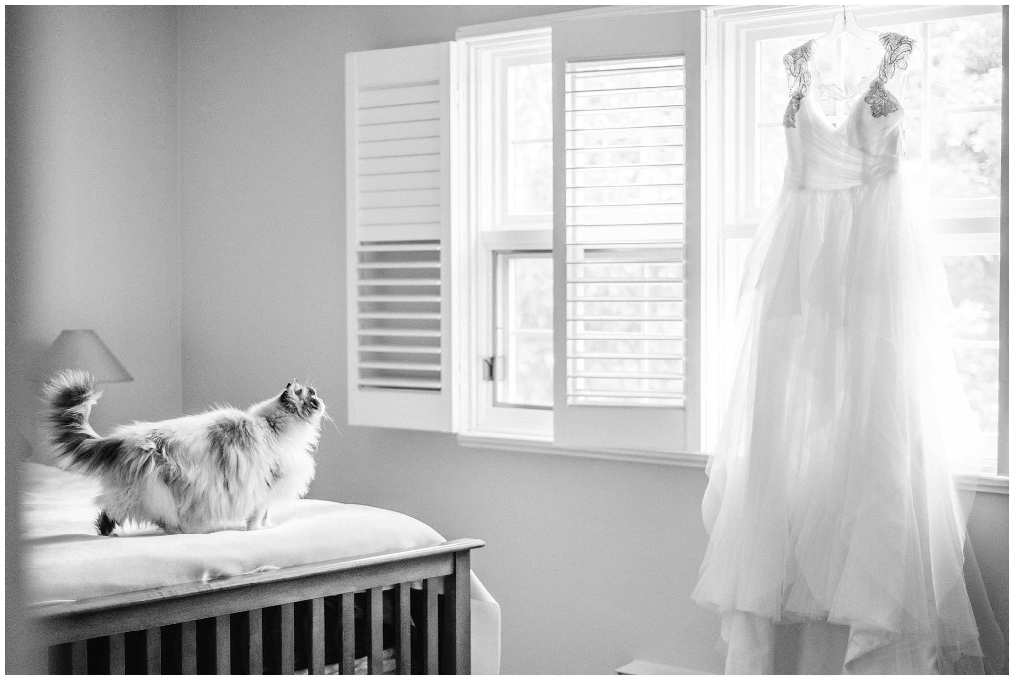 ColouCurious cat looking at gorgeous Hayley Paige gown by Jenn Kavanagh Photography