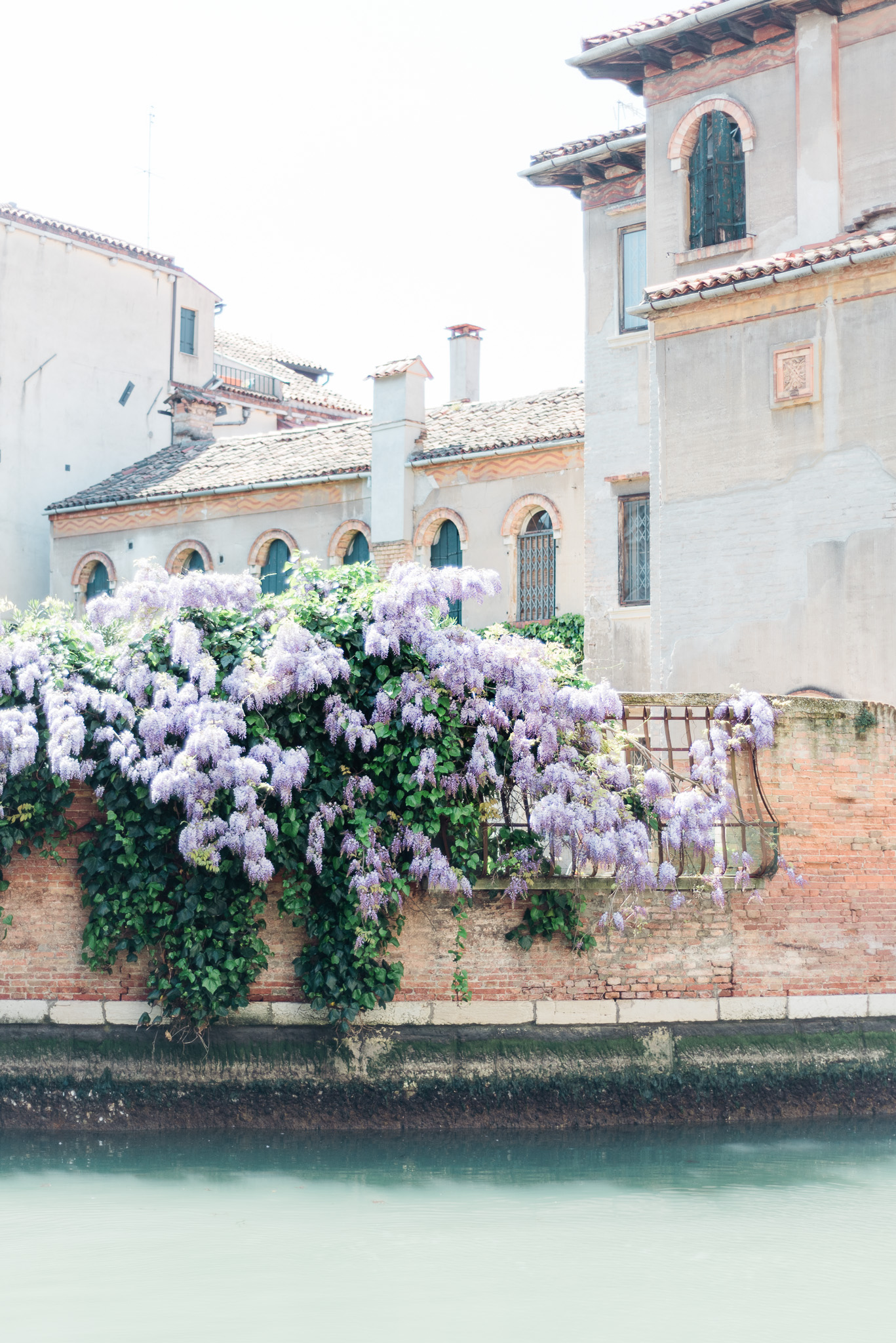 Wisteria hanging over canals in Venice | Two Weeks in Italy by Jenn Kavanagh Photography